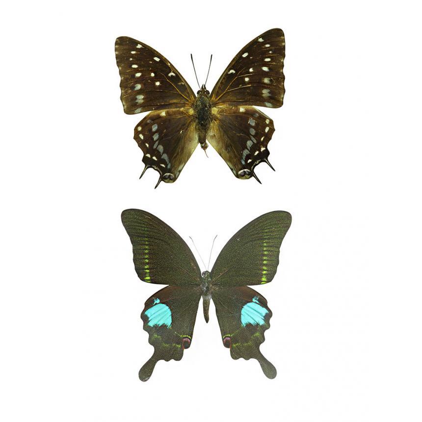 2 Πεταλούδες