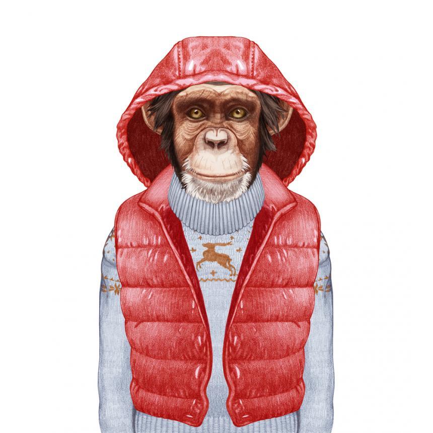 Πίνακας Πίθηκος με κόκκινο αμάνικο