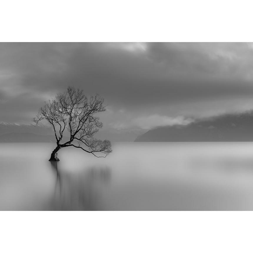 Πίνακας Δέντρο στη θάλασσα BW