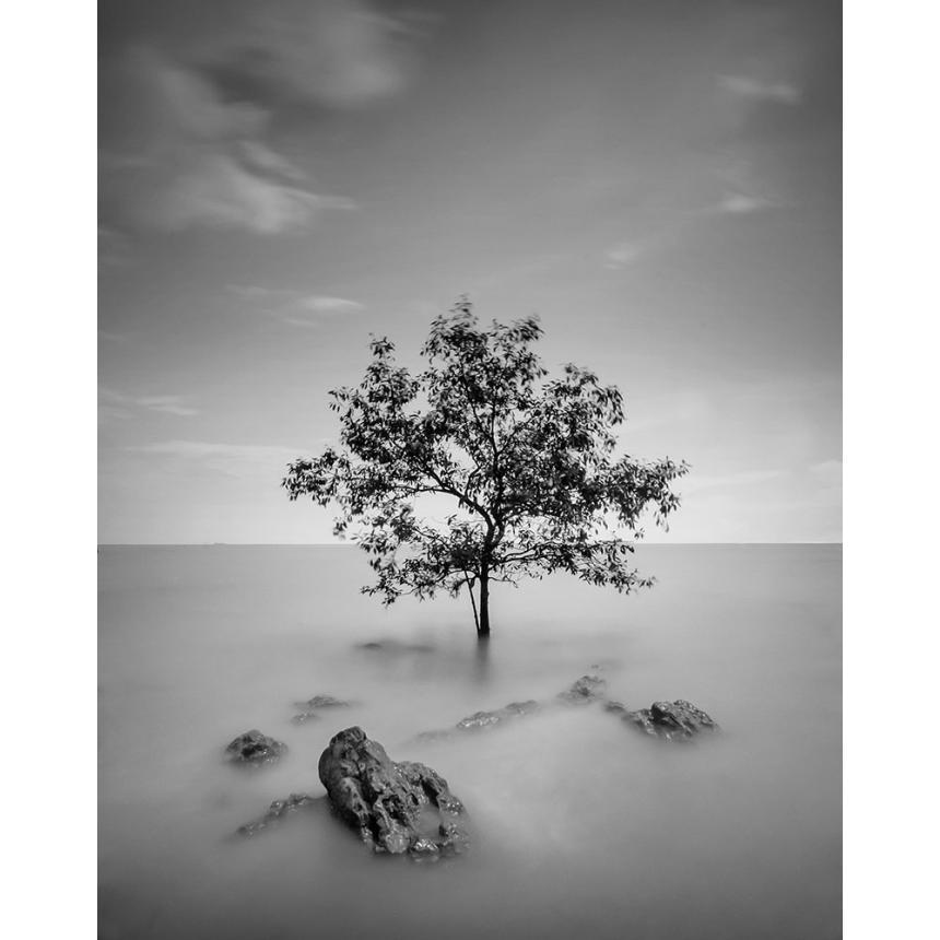 Πίνακας Ασπρόμαυρο Δέντρο BW