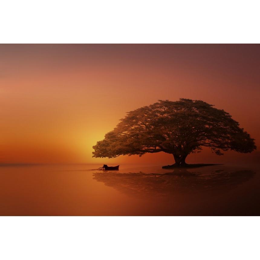 Ηλιοβασίλεμα με δέντρο στην θάλασσα