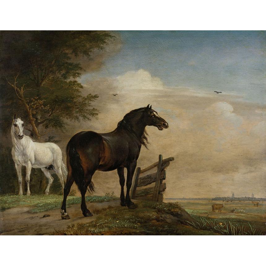 Πίνακας Άσπρο και μαύρο Άλογο
