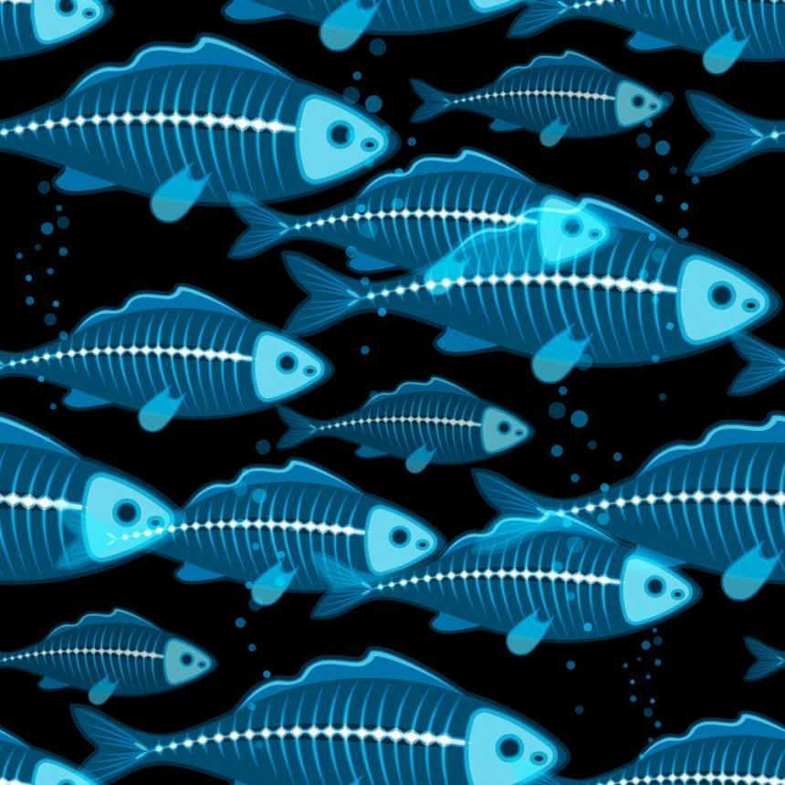 Πίνακας Ακτινογραφία ψαριών 2