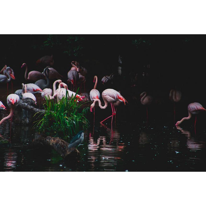 Πίνακας Flamingo