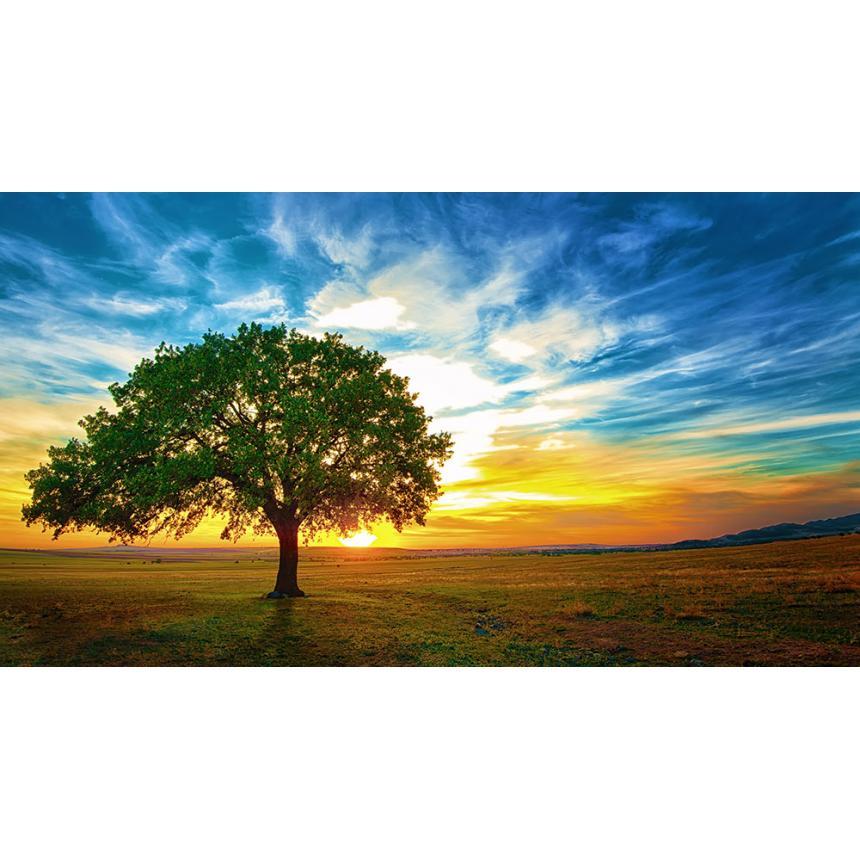 Πίνακας Δέντρο / Ηλιοβασίλεμα