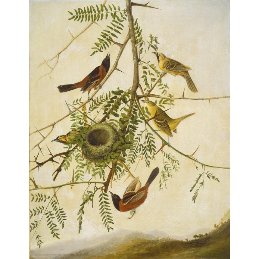 Πίνακας Πουλιά