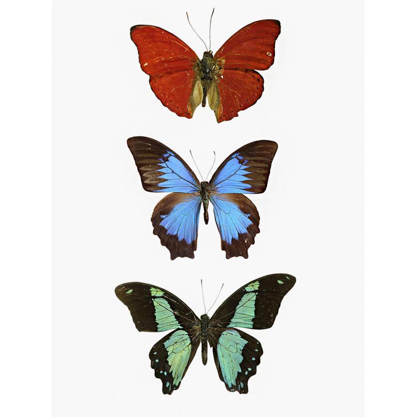 3 Πεταλούδες