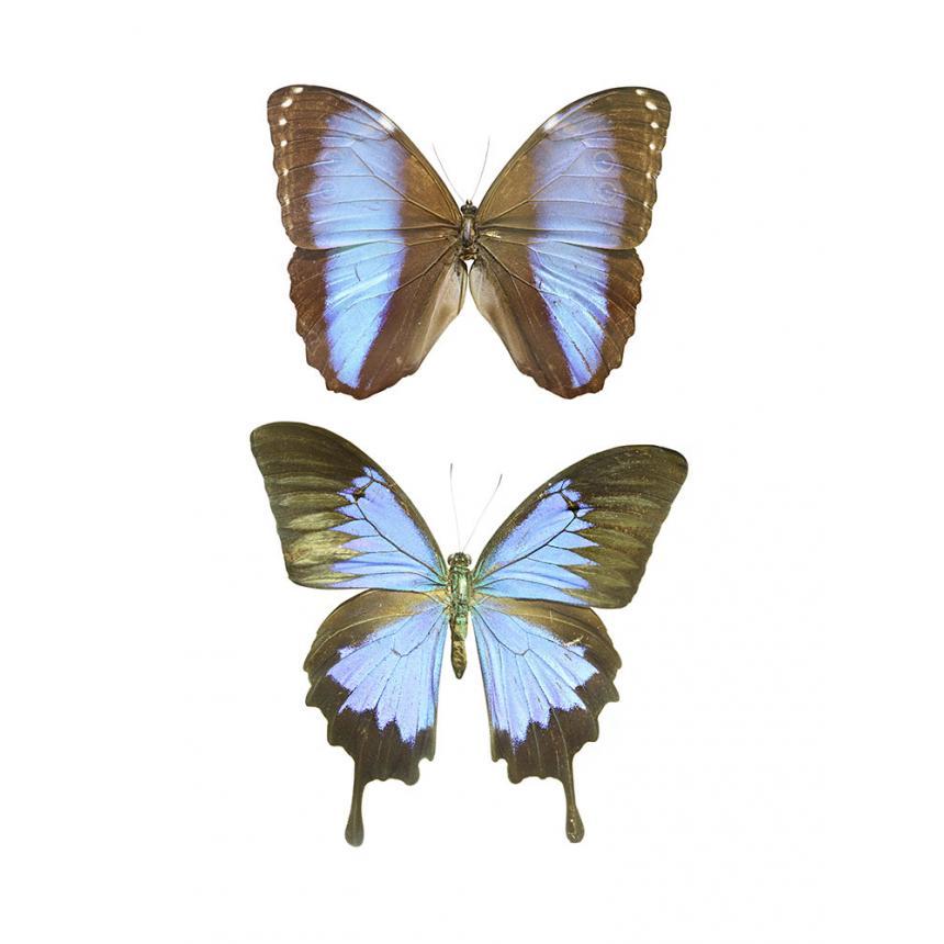 2 Πεταλούδες - Μπλε