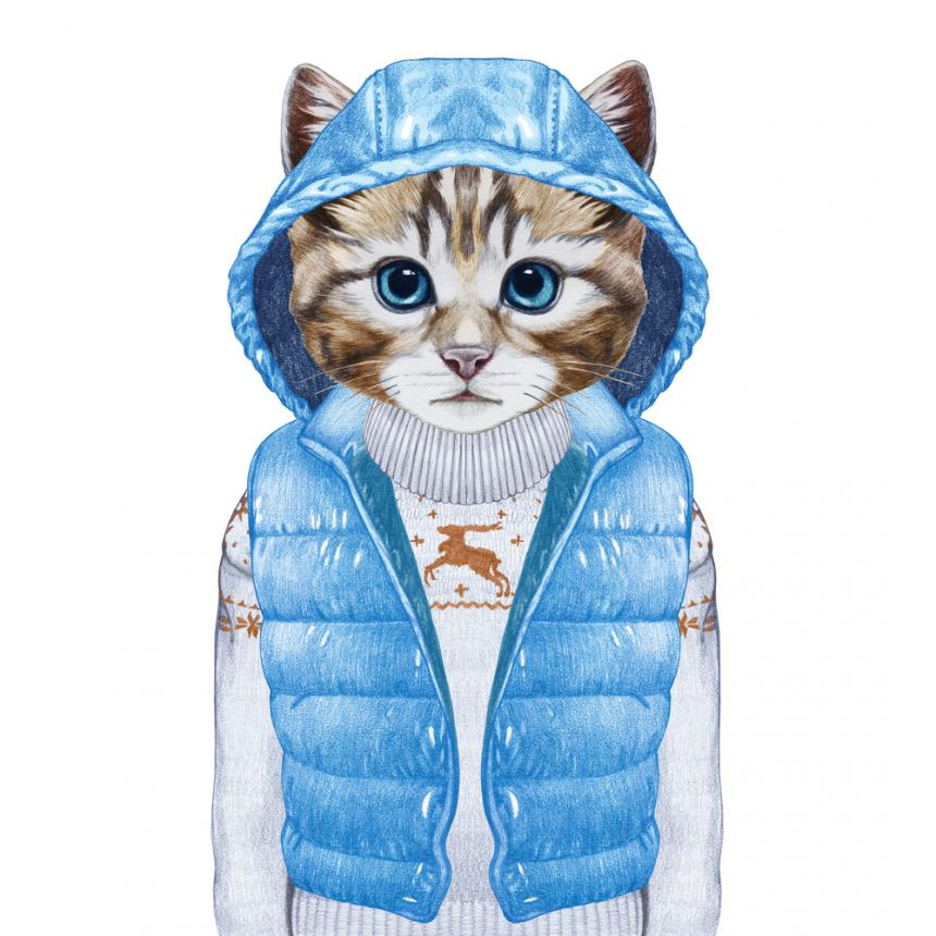 Πίνακας Γάτα με σιέλ αμάνικο