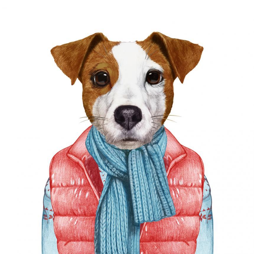 Πίνακας Σκύλος με κασκόλ