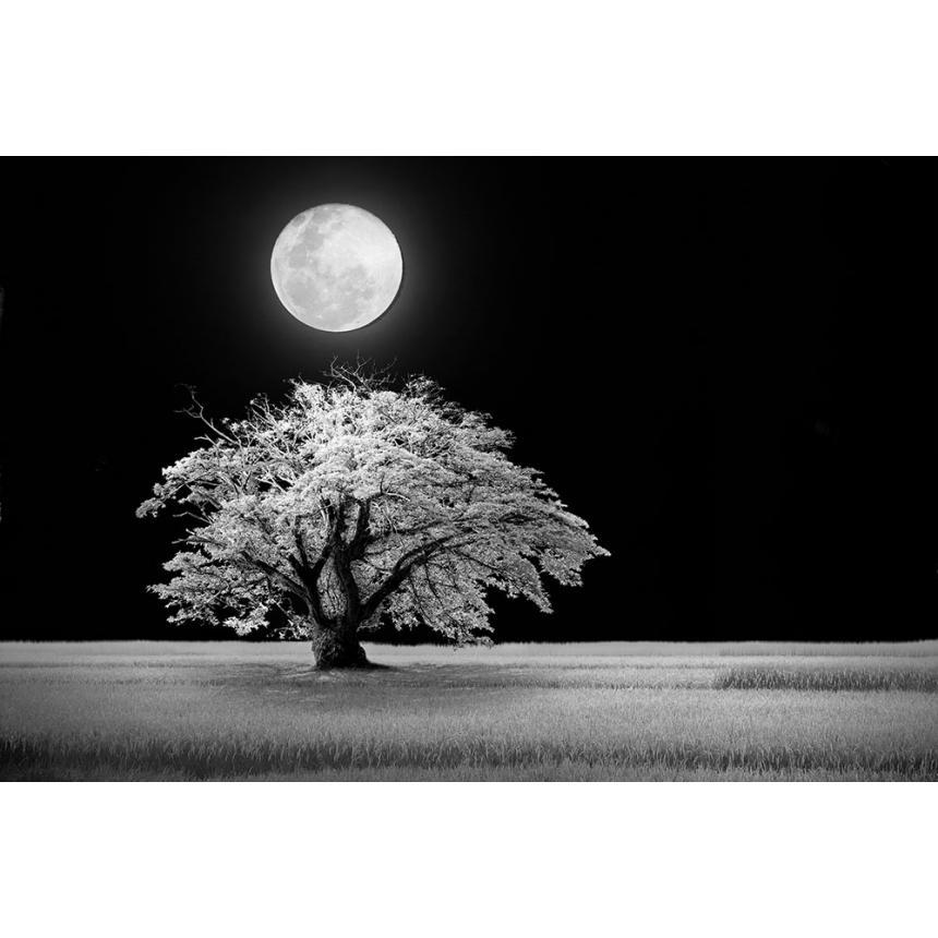 Δέντρο με φεγγάρι