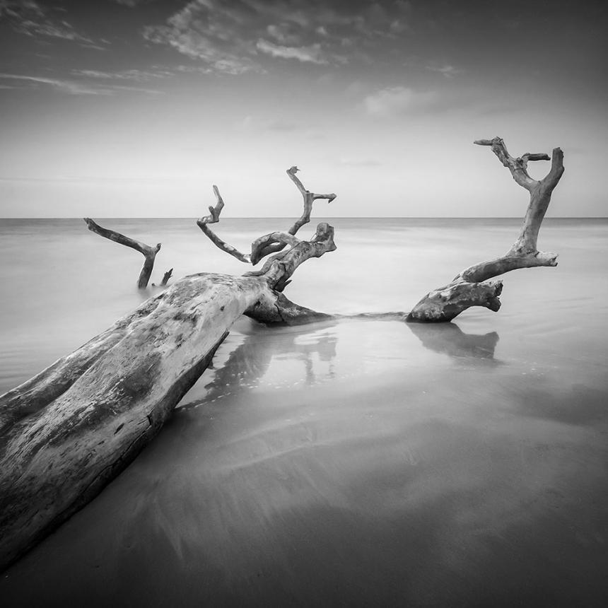 Πίνακας Κορμός Δέντρου Στη Θάλασσα BW