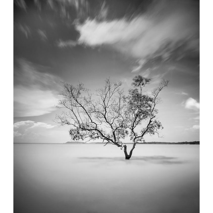 Δέντρο στη θάλασσα
