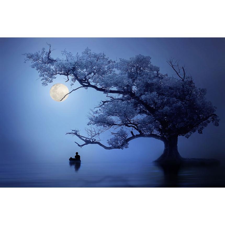 Φωτογραφικό έργο Φεγγάρι και Δέντρο