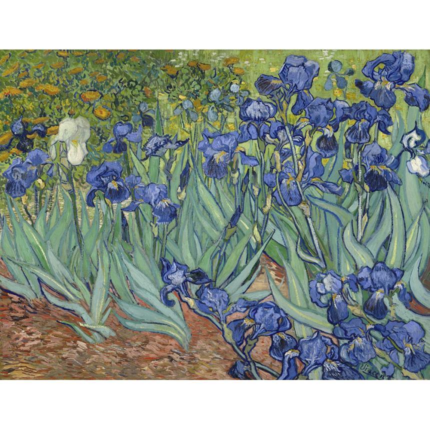 Vincent Van Gogh - Irises