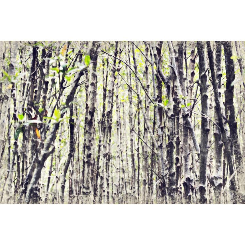 Πίνακας Κορμοί δέντρων