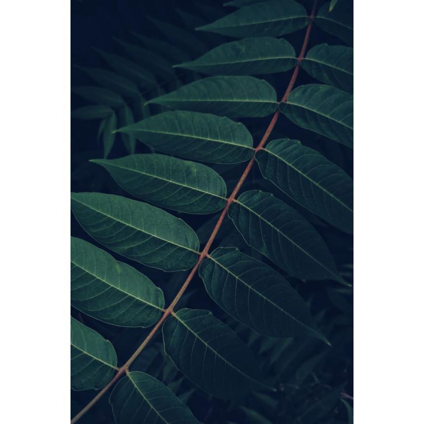 Πίνακας Φυτό