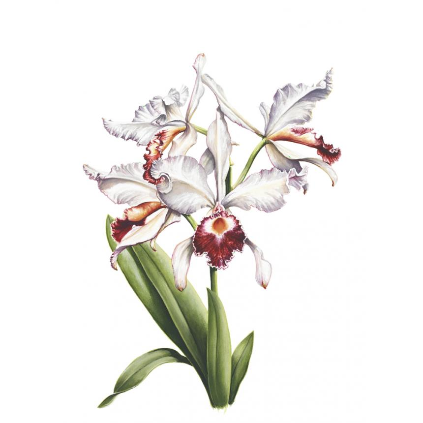 Πίνακας Ορχιδέες XVI