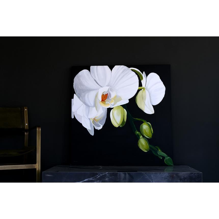 Ορχιδέες με μπουμπούκια ''Orchids with buds''